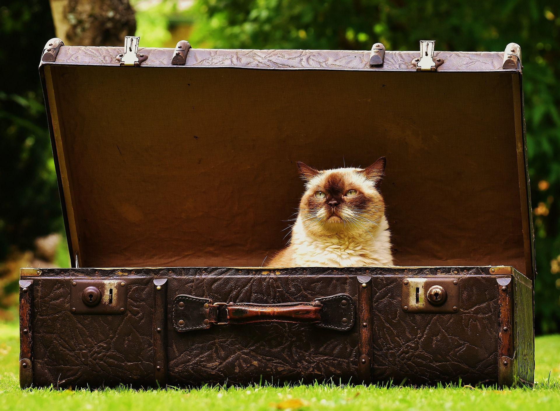 luggage-1643010_1920.jpg.5d9527fdcd39890